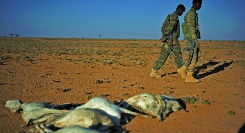 Servicemen walk past a flock of dead goats in a dry area in northeastern Somalia, on December 15, 2016 where drought has severely affected livestock