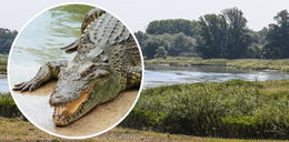 Krokodyl Mireczek uciekł właścicielowi. Miej się na baczności w okolicach Odry!