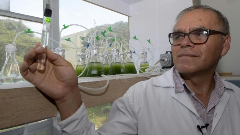 Peruvian biologist Enoc Jara is leading a team of scientists fortifying algae in order to combat water pollution