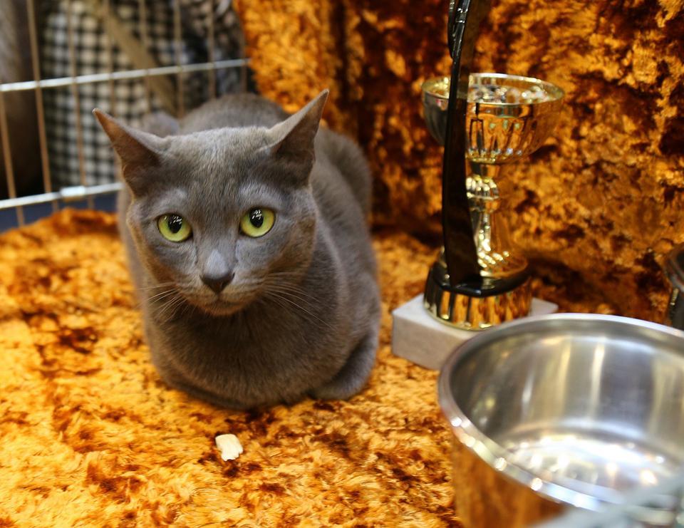 Sprawdź Ile Kosztują Rasowe Koty