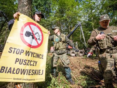 Dyskusja wokół Puszczy Białowieskiej trwa
