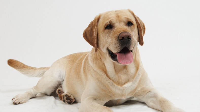 Pies pomoże wykryć nowotwór płuc