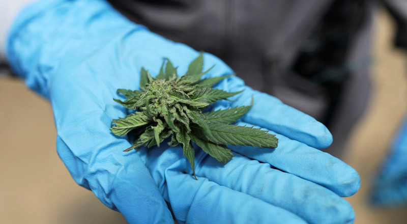 East Africa tipped to become a major export hub for medical marijuana