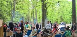 Tak sadzili las w Matemblewie