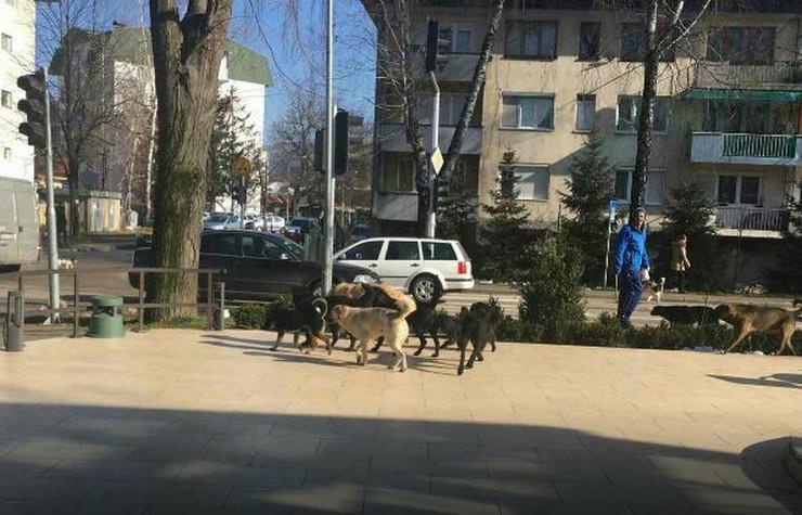 Kotor Varos psi lutalice