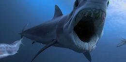 Brutalne ataki na rekiny. Szokujące zdjęcia