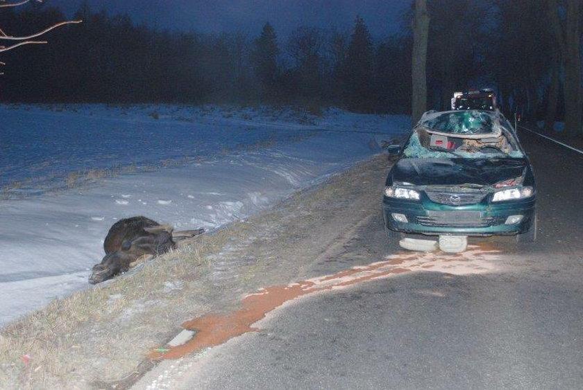 Osobówka zderzyła się z łosiem na drodze wojewódzkiej nr 650