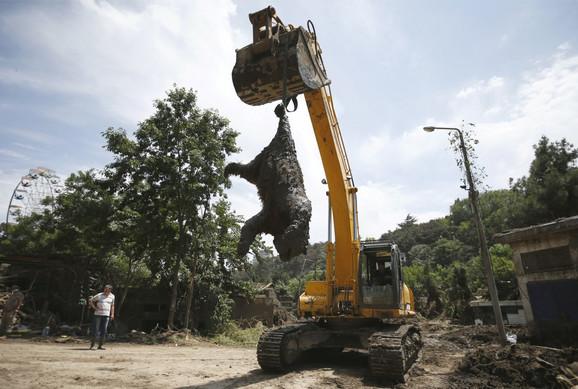 Dizalica sklanja mrtvog medveda u zoološkom vrtu u Tbilisiju u Gruziji nakon poplava.