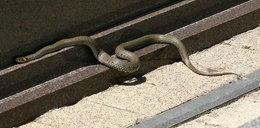 Klątwa węży na cmentarzu