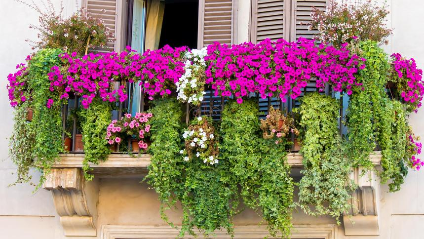 Jakie Rośliny Wybrać Na Balkon Kwiaty Które Idealnie Go