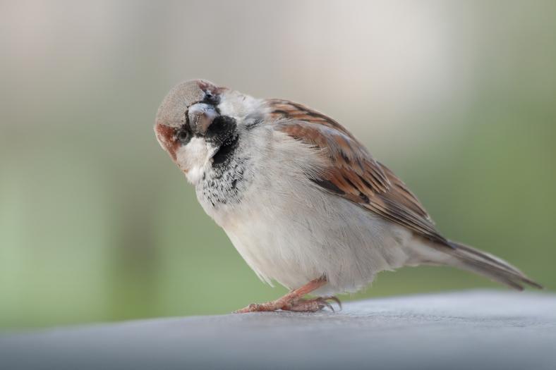 Rozpoznasz Ptaki Zimujące W Polsce Quiz Kobieta