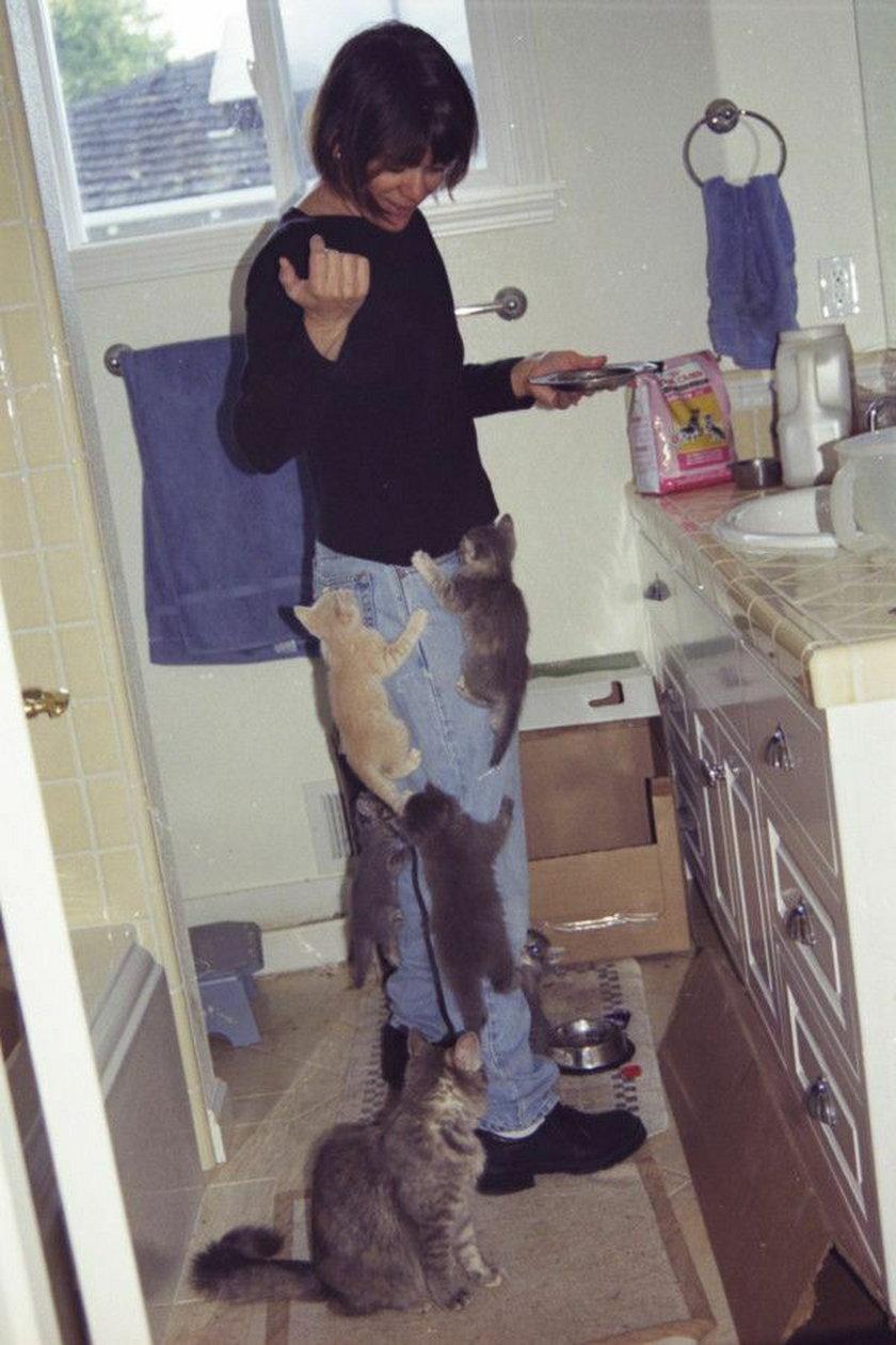 Śmieszne zdjęcia kotów