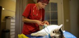 Nowe łapki dla Łatki. Kotu wszczepiono implanty