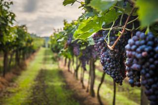 Wino dobrze komponuje się z… paliwem rakietowym