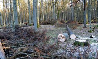 Bochenek: Działania dot. Puszczy Białowieskiej są konieczne