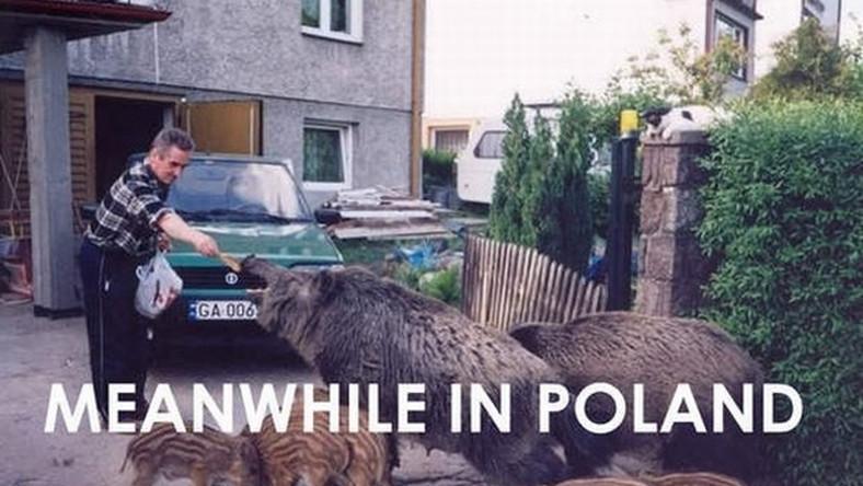 """""""Meanwhile in Poland"""". Internet śmieje się z Polaków"""
