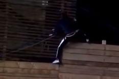"DAVID DRAGOJEVIĆ POBEGAO IZ ""ZADRUGE 2"" Preskočio ogradu sa krova, niko nije mogao da ga spreči"