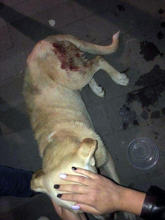 Pas napadnut na Trgu Slobode u Subotici