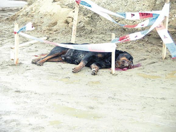 Telo psa koji je ubijen pre dva dana u Beogradu
