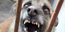 6-miesięczna dziewczynka rozszarpana przez psa