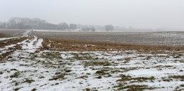 Makabra na polu. Znaleziono półnagie ciało kobiety
