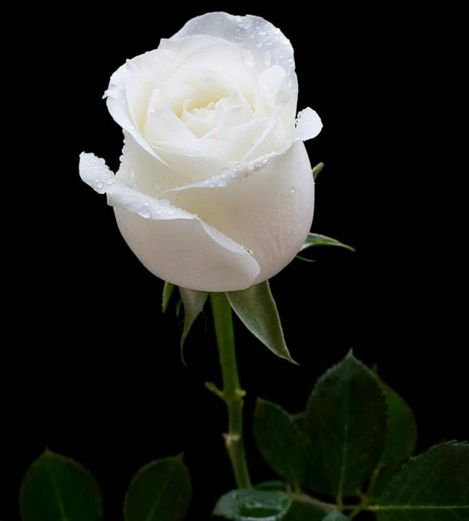Zari Hassan's heartfelt Valentine's Day message as she shares White Rose