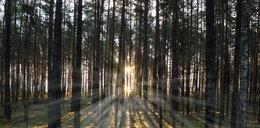 2,5-letni chłopczyk godzinami błąkał się po lesie