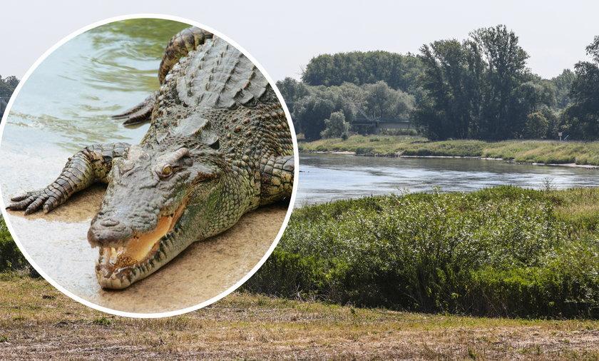 Krokodyl uciekł z hodowli w Czechach. Może pływać już w Odrze po polskiej stronie granicy