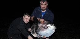 Morze wyrzuciło rybę dziwo!