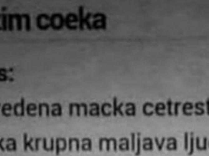 Balkanci se OTIMAJU o ovu RAZVEDENU MAČKU: Gastarbajterka (48) traži NAŠEG MUŠKARCA a kad čujete ŠTA NUDI odmah ćete se javiti
