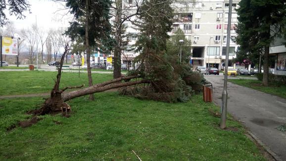 Oluja je počupala stabla u Kraljevu