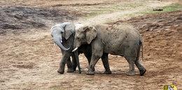 Zoo sprzeda odchody zwierząt. Po co?