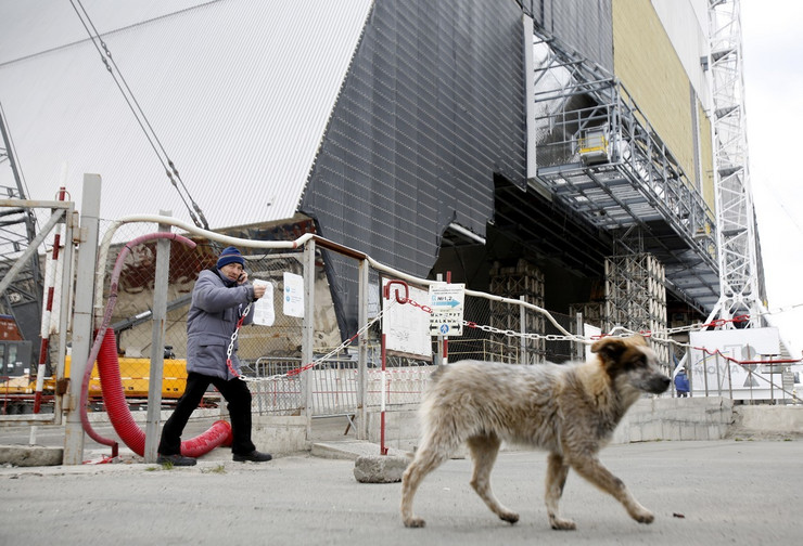 černobilj psi