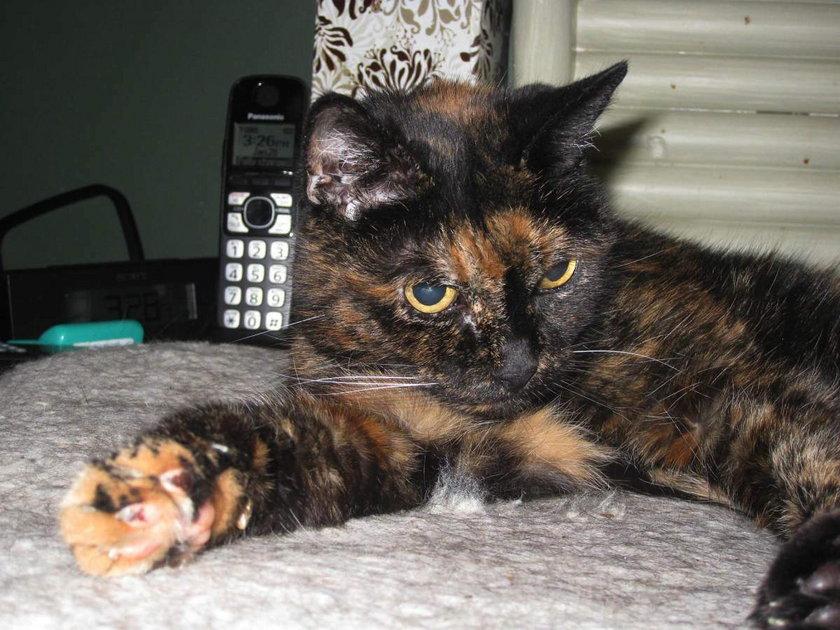 Kotka żyła 27 lat i dwa miesiące