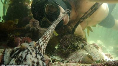 South Africa's My Octopus Teacher wins Best Documentary at the Oscars
