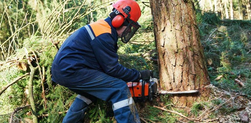 Przerażające znalezisko w pniu drzewa. Drwale oniemieli