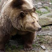 """""""ŽIVA MUMIJA"""" Medved je Aleksandru polomio kičmu i ostavio ga u jazbini kao """"obrok"""". Mesec dana kasnije NAĐEN JE ŽIV (UZNEMIRUJUĆI SADRŽAJ)"""