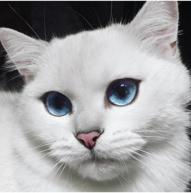 Maca špricati fotografije