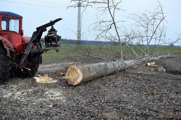 A fa lombkoronája zuhant rá a 60 éves férfira /Fotó: Police.hu/