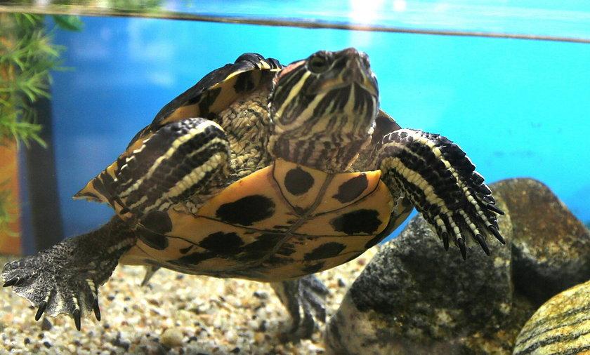 Imię dla żółwia