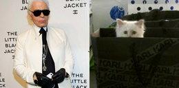 Zrobi torebkę na cześć kotki celebrytki