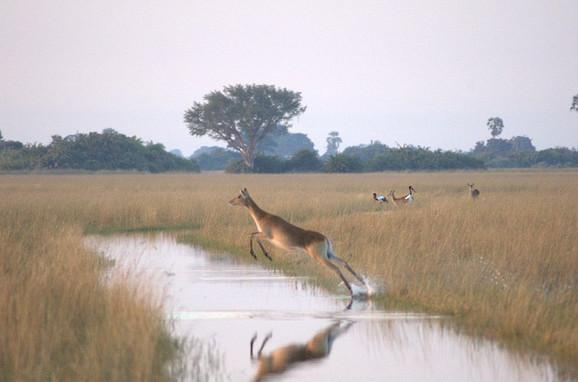 Delta reke Okavango