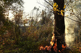 Zrenjanin089 pozar u parku prirode rezervatu Carska Bara foto Nenad Mihajlovic_preview