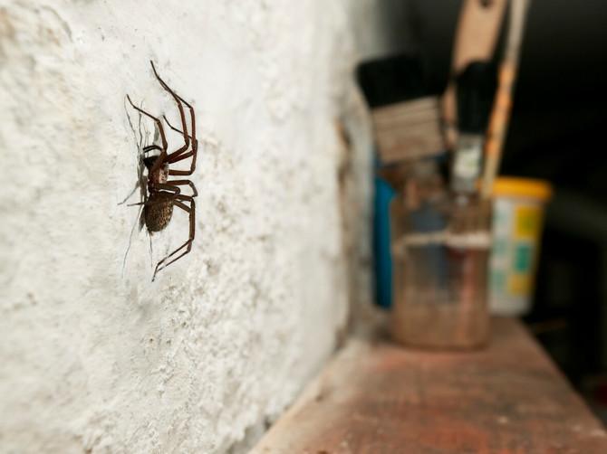 Ako upotrebite ovo, u stanu više nećete videti pauka!