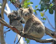 Australia zachwyca naturą