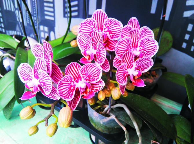 Zašto orhideje vole kuhinju