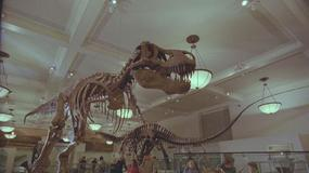 Dinozaury żyją! - galeria