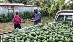 ___8627204___2018___7___17___17___export-of-avocados-kenya-export