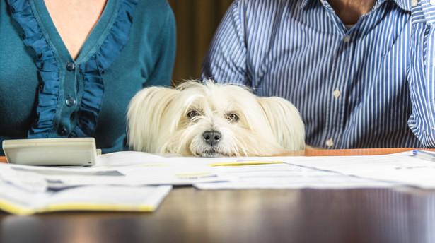Pies nie jest rzeczą, którą można dowolnie przestawiać i oczekiwać, że dostosuje się do planów i zmian w życiu swojego właściciela.