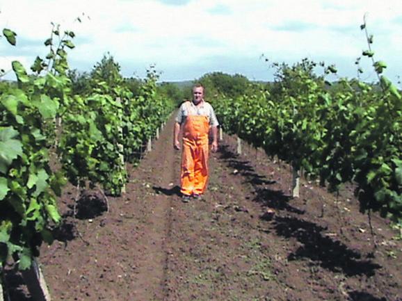 Živojin Bojić, vinogradar iz Gornjeg Matejevca